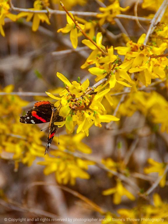 015-butterfly-wdsm-19apr14-001-7091