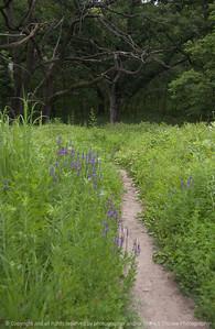 015-forest_trail-wdsm-06jul08-2995