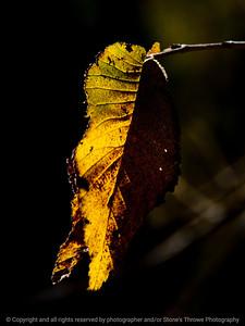 015-leaf-wdsm-29sep12-001-8447