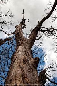 015-tree-wdsm-14mar16-12x18-004-7011