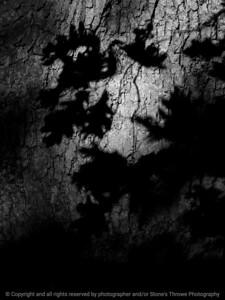 015-shadows_leaves-wdsm-30jul11-001-bw-0133