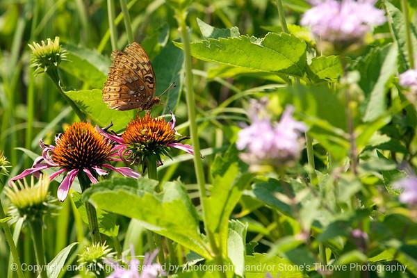015-butterfly-wdsm-24jun12-003-6912