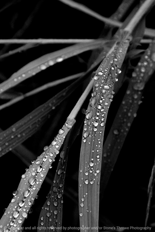 015-grass_dew-wdsm-30jul13-3114