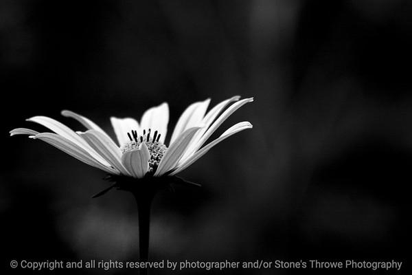 015-flower-wdsm-05aug13-0752
