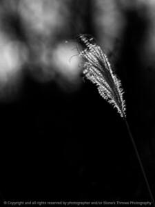 botanical-wdsm-31jan16-09x12-001-6357