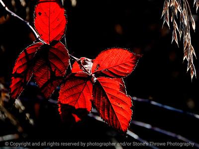 015-leaf_autumn-wdsm-23nov11-002-2116