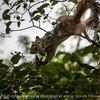015-squirrel-wdsm-28jul14-003-1757