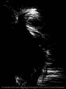 015-hair_sunlight-wdsm-09jul12-002-bw-7261
