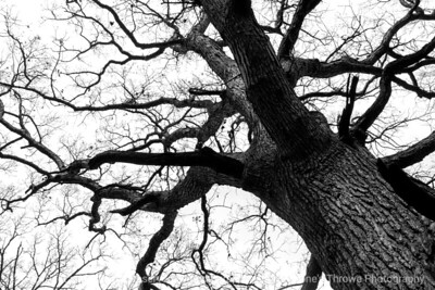 015-tree-wdsm-29feb16-18x12-003-bw-6830