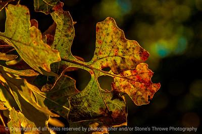 015-leaf_autumn-wdsm-26oct13-5428