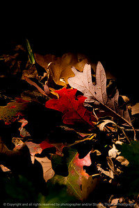 015-leaves_autumn-wdsm-07oct13-200-4864