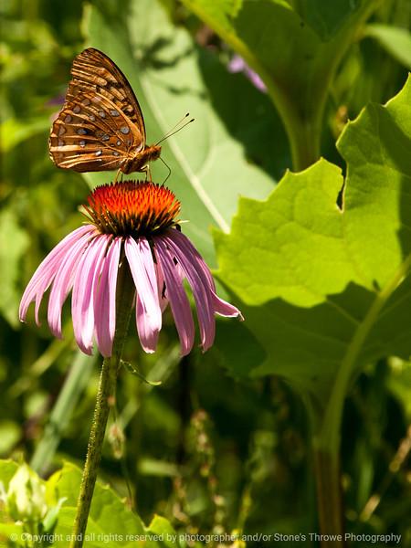 015-butterfly-wdsm-12jul13-001-2090