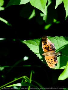 015-butterfly-wdsm-17jun11-001-0006