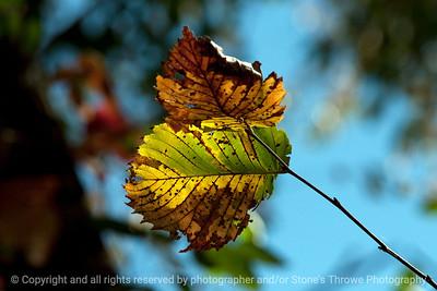 015-leaf-wdsm-27sep12-003-8417