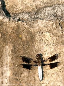 015-dragonfly-wdsm-21jun10-cvr-5544