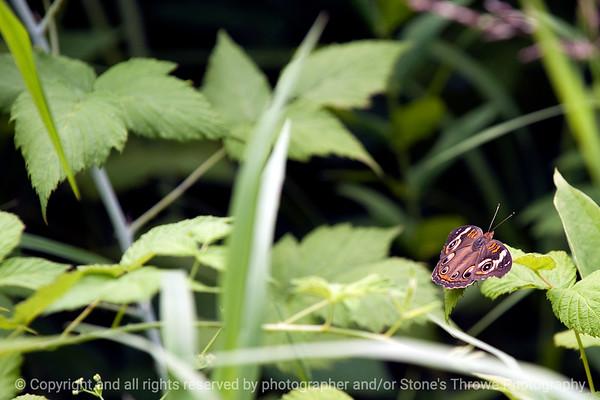 015-butterfly-wdsm-29jun12-003-7107