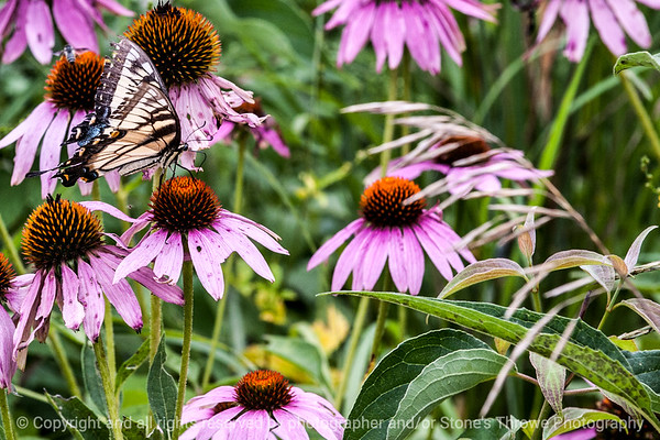 015-butterfly-wdsm-16aug14-003-9094