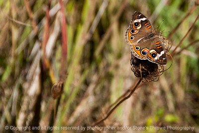 015-butterfly-wdsm-22sep13-4290