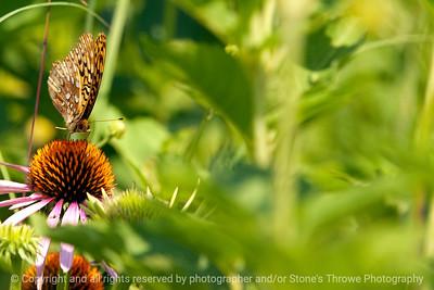 015-butterfly-wdsm-24jun12-6904