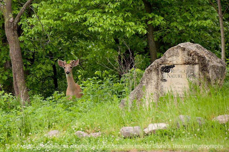 015-deer-wdsm-24may16-18x12-013-9353