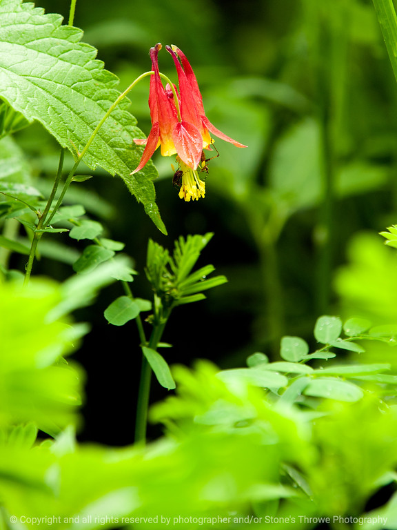 015-flower-wdsm-30may13-0725