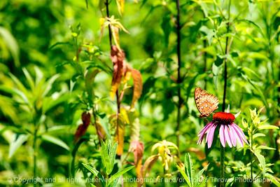 015-butterfly-wdsm-17jun12-6825