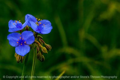 015-flower-wdsm-05jun14-003-1523