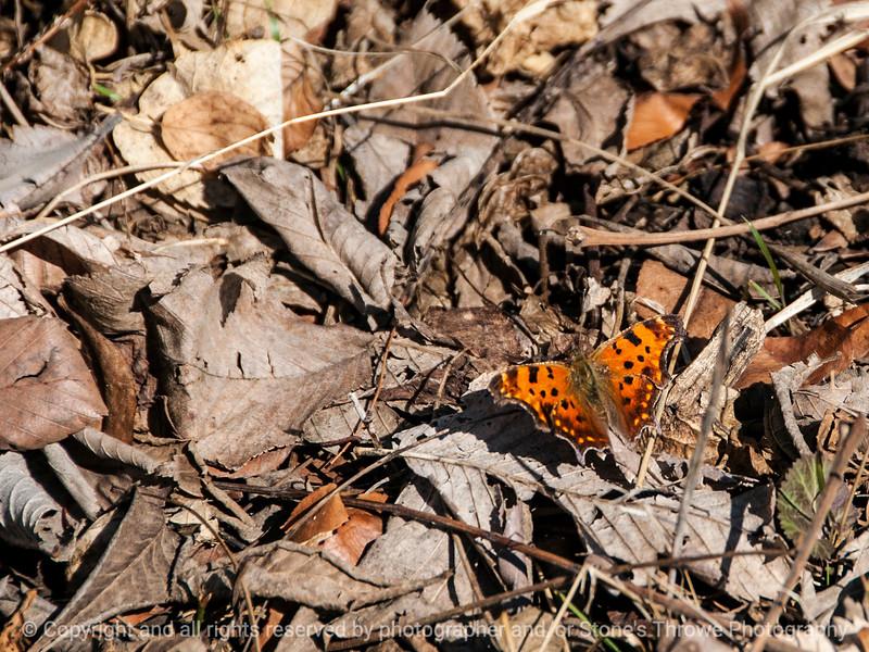 015-butterfly-wdsm-29mar14-002-6881