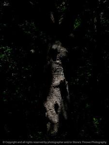 015-tree_shadow-wdsm-02jul13-1951
