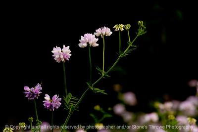 015-botanical-wdsm-26may12-003-6304