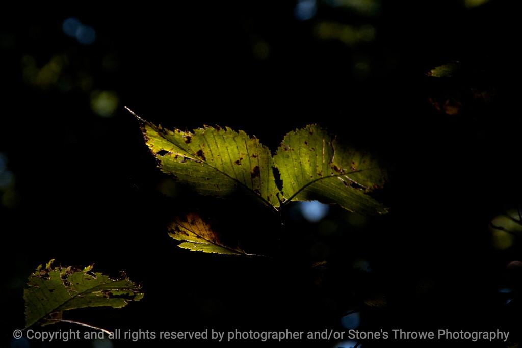 015-leaf-wdsm-07oct13-003-4858