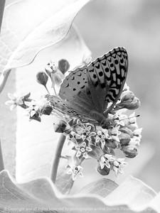 015-butterfly-wdsm-25jun13-1455