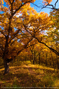 015-trees_autumn-wdm-02nov13-5559