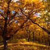 015-trees_autumn-wdm-02nov13-5559