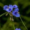 015-flower-wdsm-05jun14-001-1520