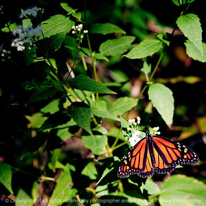 015-butterfly-wdsm-07sep10-sq-7576