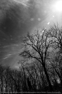 tree-wdsm-30mar15-12x18-004bw-2330