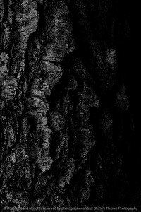 015-tree_bark-wdsm-02sep14-001-bw-9247
