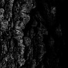 015-tree_bark-wdsm-02sep14-001-bw-9247