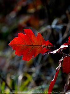 leaf-wdsm-14nov15-09x12-001-5931