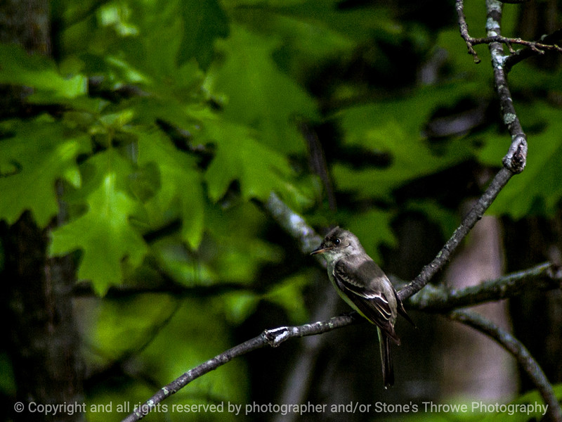 015-bird-wdsm-26may14-003-1474