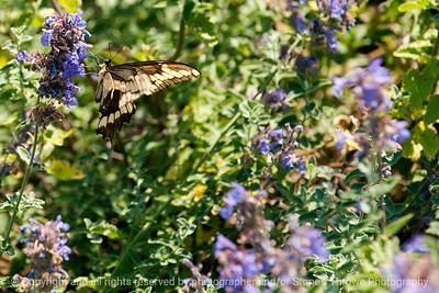 015-butterfly-wdsm-14jun12-6731
