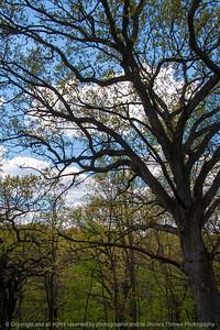 015-woods-wdsm-03may16-12x18-004-8410