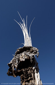 015-dried_out_cactus-saguaro_ntl_monument_az-05dec06-0124