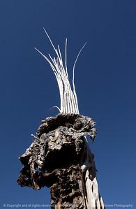 015-dried_out_cactus-saguaro_ntl_monument_az-05dec06-0124