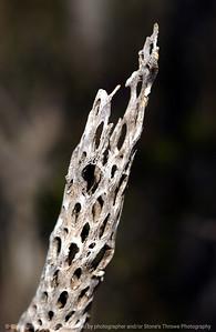 015-cactus_detail-saguaro_ntl_monument_az-05dec06-0101