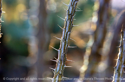 015-cactus_detail-saguaro_ntl_monument_az-03dec06-0038