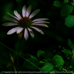015-flower-wdsm-15aug21-09x09-006-400-4259