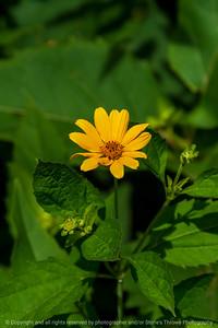 015-flower-wdsm-16jul20-08x12-008-400-7281