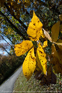 015-leaves_autumn-wdsm-19oct17-08x12-007-2354